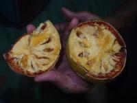 как приготовить чай из мякоти баэля / баиля | how to prepare Bael fruit ice tea