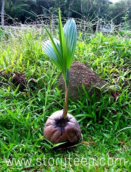 живое домашнее Органическое кокосовое масло