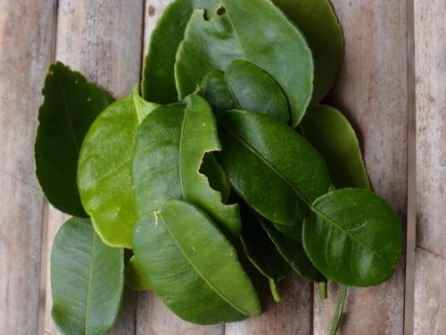 листья Каффир-лайма лаймквата | Kaffir Lime leaves