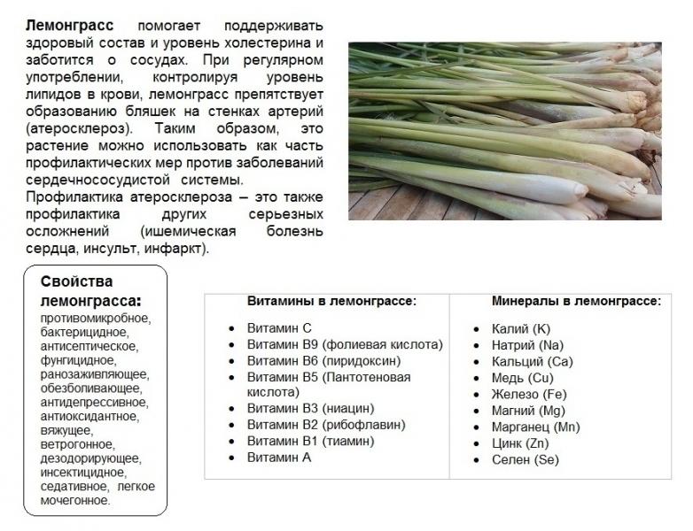 лемонграсс, лимонное сорго - основные свойства и питательные вещества lemongrass properties and nutrients