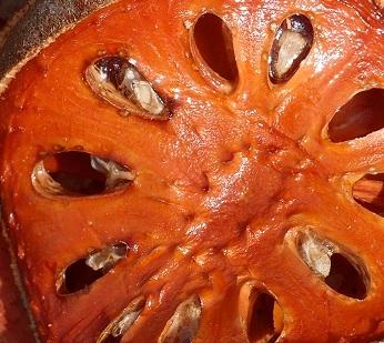 Баиль Aegle marmelos