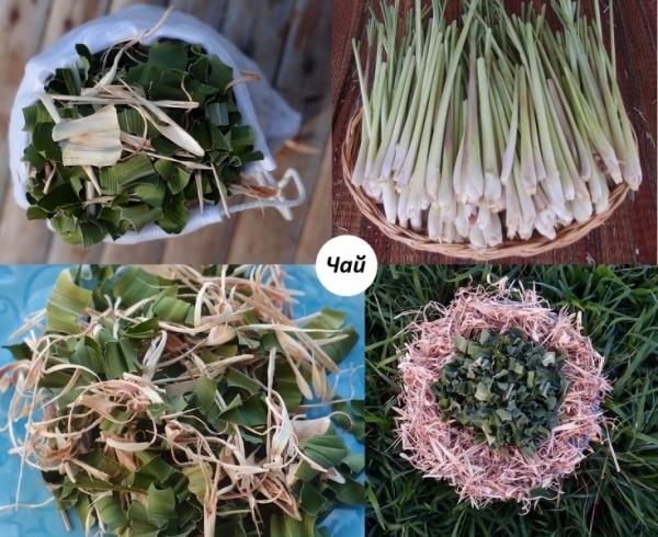 0Pandan Lemongrass herbal tea