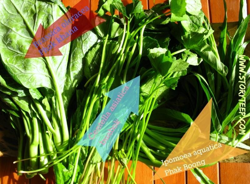 хлорофилл-антиоксидант-детокс коктейль растения готтукола-Ипомея водяная-капуста кале