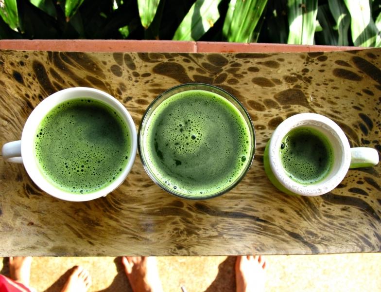 1зеленый хлорофилл-антиоксидант-детокс коктейль растения готтукола-Ипомея водяная-капуста кале