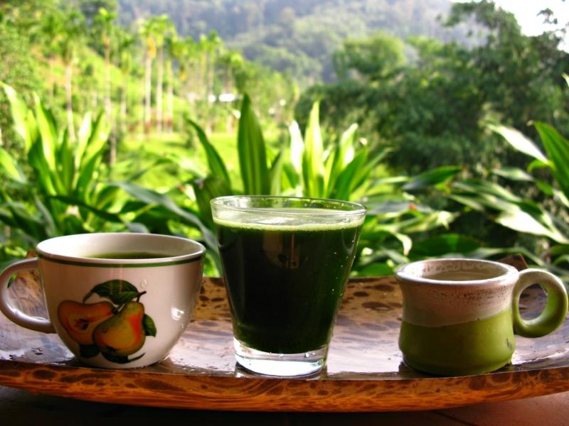 2зеленый хлорофилл-антиоксидант-детокс коктейль растения готтукола-Ипомея водяная-капуста кале