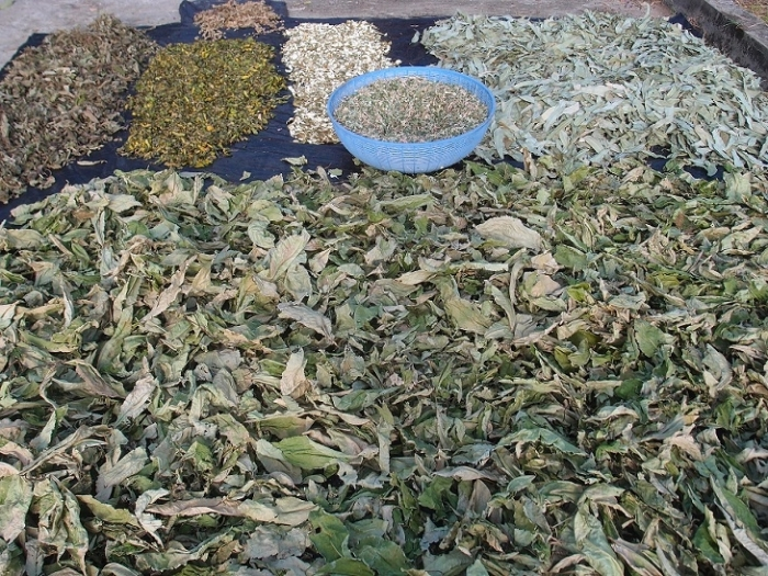 Thai medicinal Herbs sun-dried