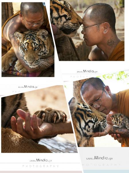 Храм Tiger Temple Teep