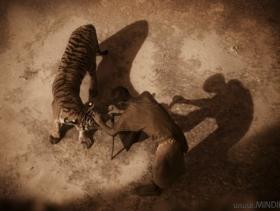 Тип и тигры